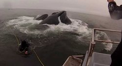 Ballena casi se come a buzos en el mar de California [VIDEO]
