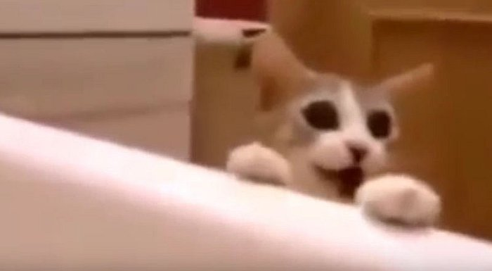YouTube: Gato se desespera e intenta 'salvar' a su dueña de la bañera [VIDEO]