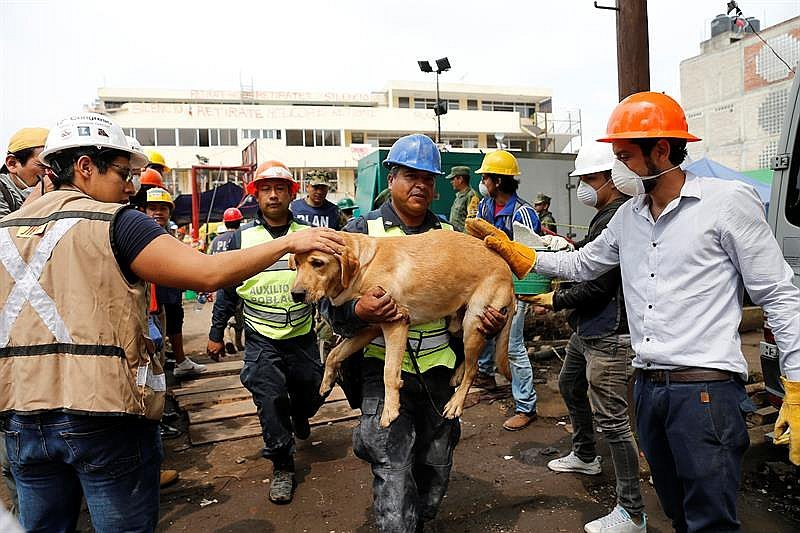 Terremoto en ​México: Frida, el animal que salva vidas entre escombros (FOTOS y VIDEO)