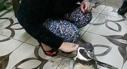Susy Díaz posa con un pingüino pese a ser especie en cautiverio (VIDEO)
