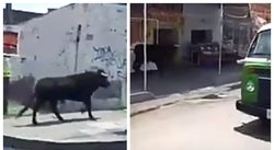 Toro se escapa de fiesta patronal y causa pánico (VIDEO)