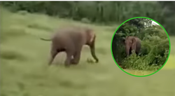 El terrible momento en que un elefante salvaje mata a un niño (VIDEO)