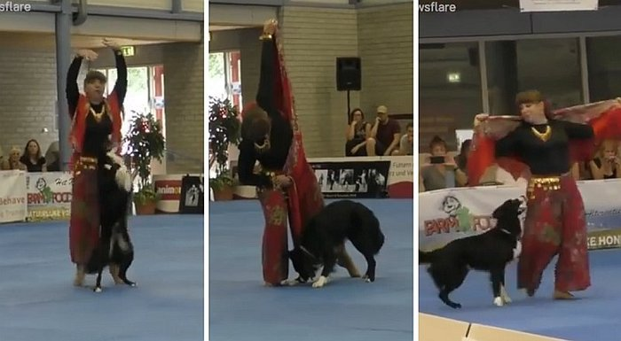 Perro causa furor en redes por su talento al bailar con su instructora (VIDEO)