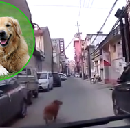 Perrito guía a ambulancia hasta su dueño desmayado (VIDEO)